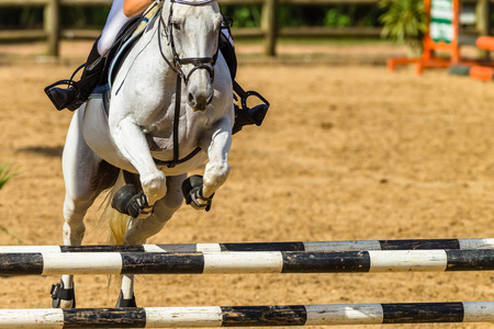Equestrian Show jumping gray horse closeup rider legs boots  arm closeup jumping gate poles outdoor arena action.