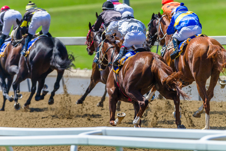 Horse Racing animals jockeys on poly sand track pounding hoofs legs speed running motion closeup abstract action photo. Stock Photo