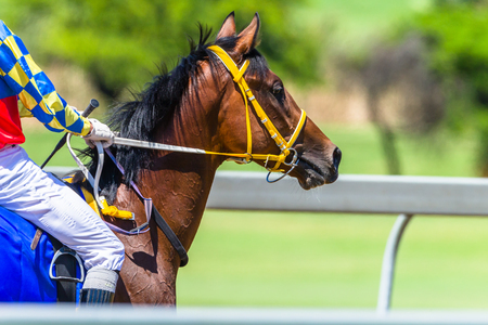 Horses Head Jockey  closeup abstract heading for starting gates on race track photo .