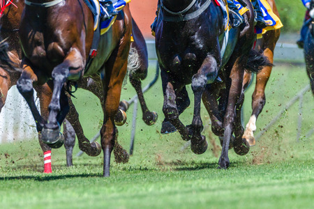 Horse Racing animals feet hoofs pounding grass track in a speed running motion  action photo.