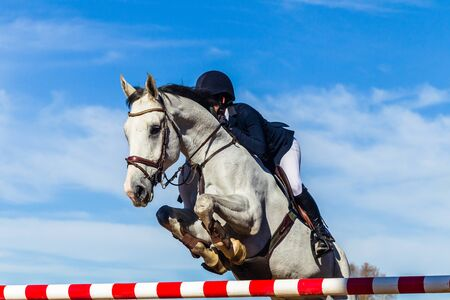 Equestrian show jumping gray horse unidentified female rider  closeup jumping action over gate poles with blue sky.