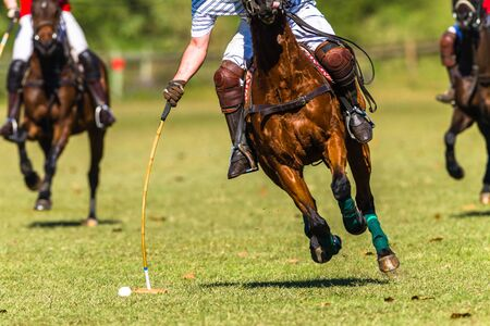 Polo Horses Riders closeup unidentified striking mallet to ball game action.