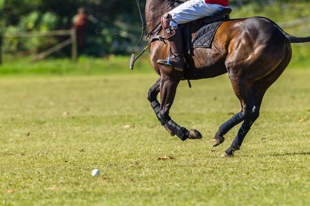 Polo Action closeup rider player horse unidentified half body abstract playing a local game. 免版税图像