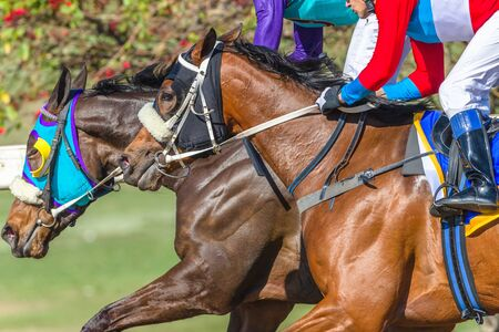 Horses jockeys racing into the final straight closeup horses heads hands abstract action photo.