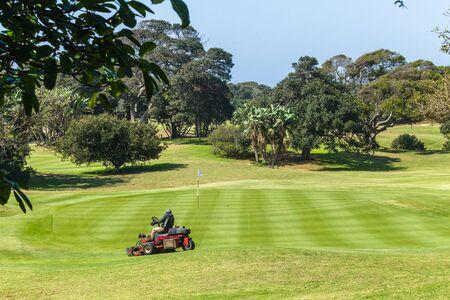 Golf course hole machine operator cutting grass on putting green with surrounding trees coastal landscape. . 版權商用圖片