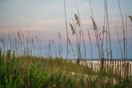Pensacola Beach grass