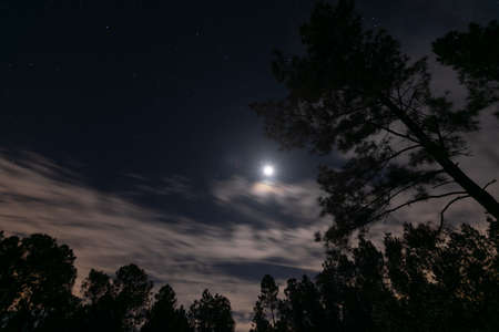 beautiful moon and night sky and stars in rural Louisiana Zdjęcie Seryjne