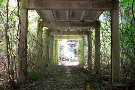 overgrown walkway at abandoned school site