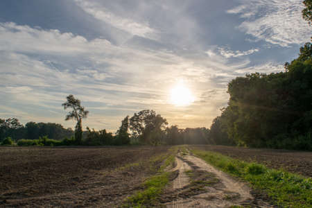 afternoon sun on an Avoyelles Parish farm road