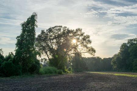 afternoon sun and sky on an Avoyelles Parish farm