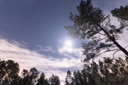 bright moon and stars in the rural Louisiana night sky