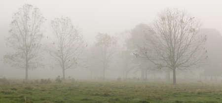 foggy morning on the farm in St. Francisville Foto de archivo