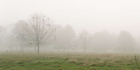 foggy morning on a St. Francisville farm Foto de archivo