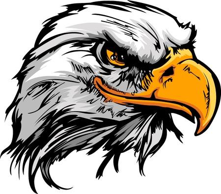 aigle: Pygargue à tête blanche ou faucon Mascot Head graphique Illustration