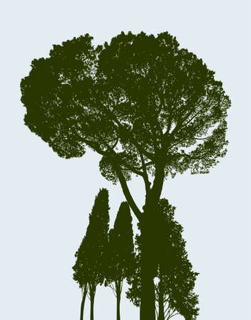 Silhouettes of a pine and the cypresses