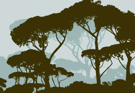 Vector image of the italian pine trees silhouettes