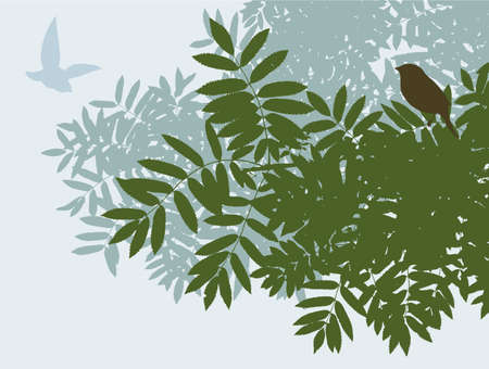 The rowan branches in summer Illustration