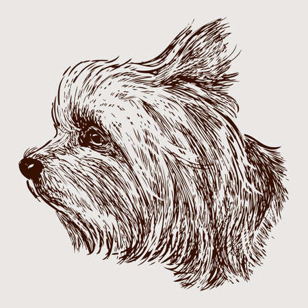 Vector image of the head of a lap dog.