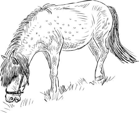 방목 조랑말의 스케치