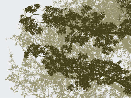 twigs: Vector image of the oak trees in the summer forest.
