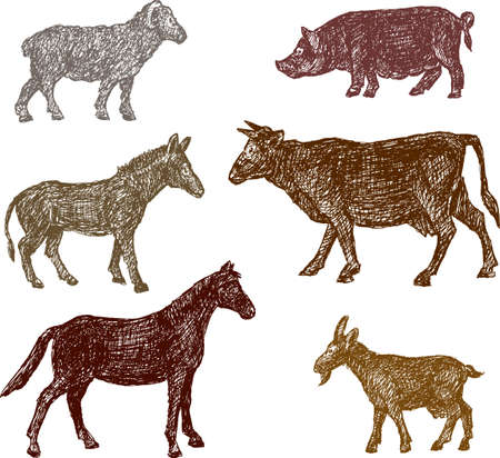 The sketches of the farm animals