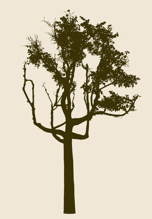 twigs: Vector image of an old deciduous tree