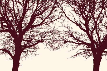 두 얽힌 된 나무의 실루엣