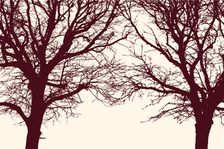 Silhouettes of two tangled trees