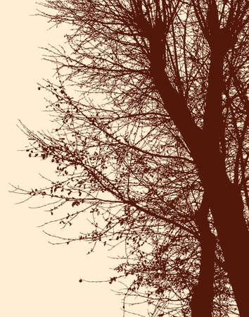 De takken van de loofbomen in de herfst.
