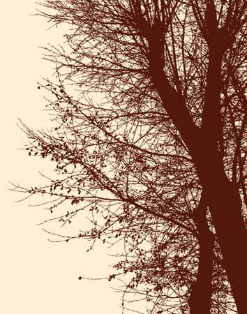 twigs: The branches of the deciduous trees in autumn. Illustration
