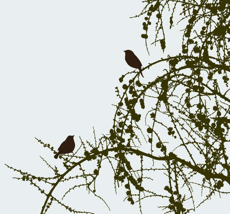 twigs: The birds on the pine branches. Illustration