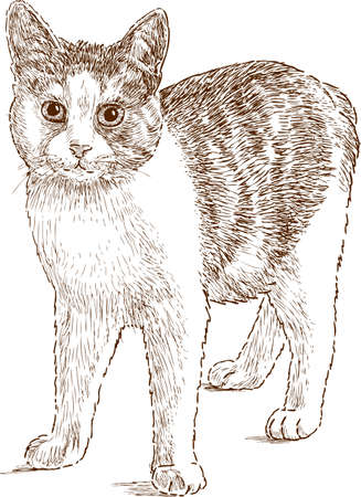 Vector drawing of a cat
