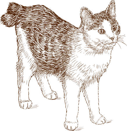 Sketch of a house animal.