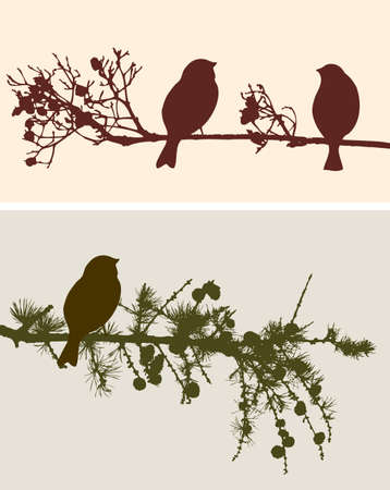 spruse: The birds on the branches vector illustration.