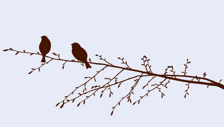The sparrows on the tree branch in spring day