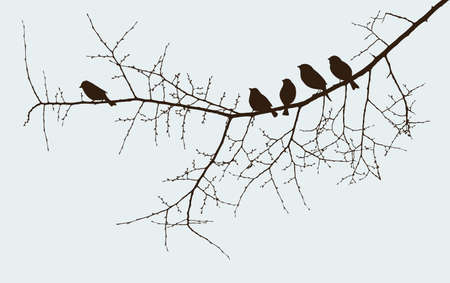 The sparrows on the twig in the springtime