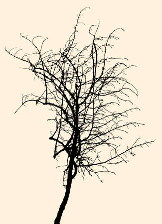 twigs: Vector image of the silhouette of a small tree