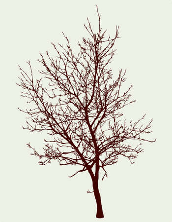 Silhouette of a fruit tree in springtime Illustration