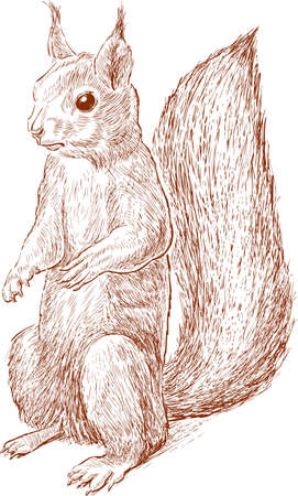 Vector drawing of a red forest squirrel