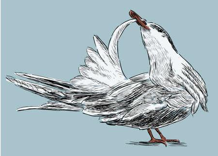 Vector image of a sea tern
