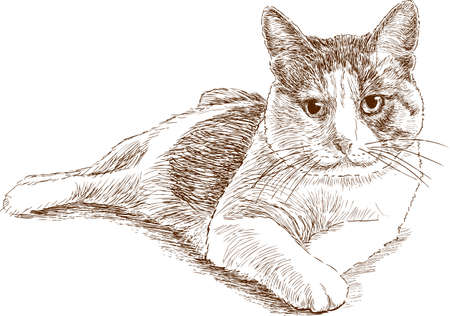 Sketch of a lying house cat