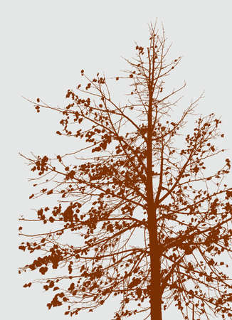 Silhouette of a tree in autumn