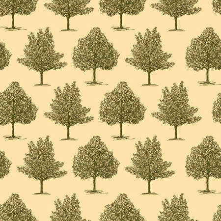 Pattern of the different deciduous trees
