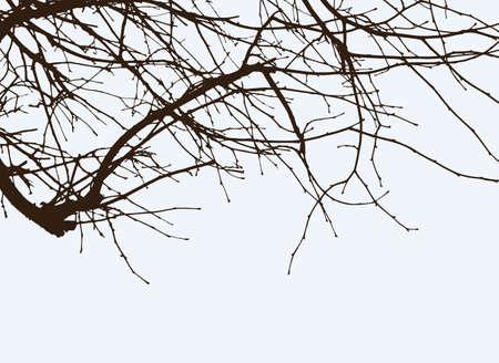木の枝の Sulhouettes  イラスト・ベクター素材