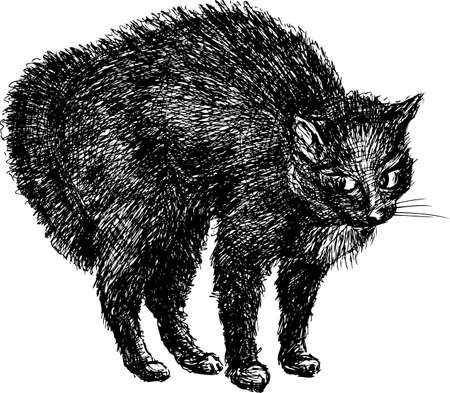 shaggy: Sketch of a black house cat Illustration