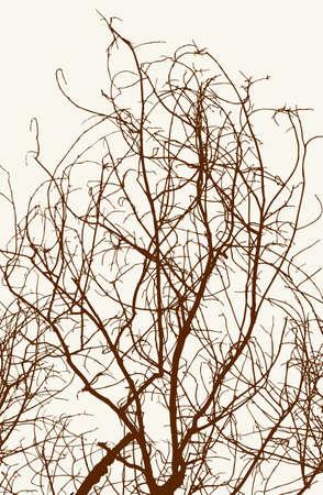 낙엽수의 얽힌 가지 일러스트