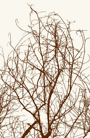 The tangled branches of a deciduous tree