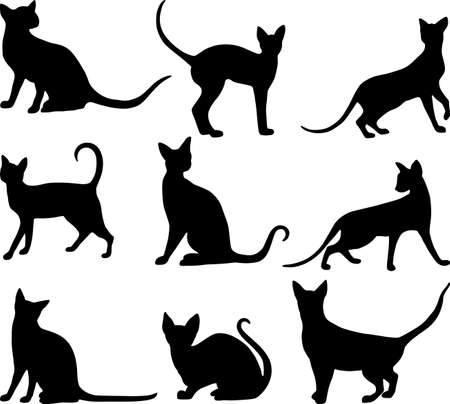 Vector image of the house cat silhouettes on white background.