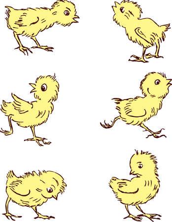 재미있는 만화 닭의 벡터 드로잉