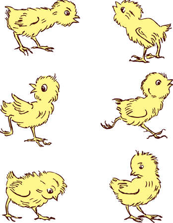 Vector drawings of the funny cartoon chickens Stok Fotoğraf - 84467949